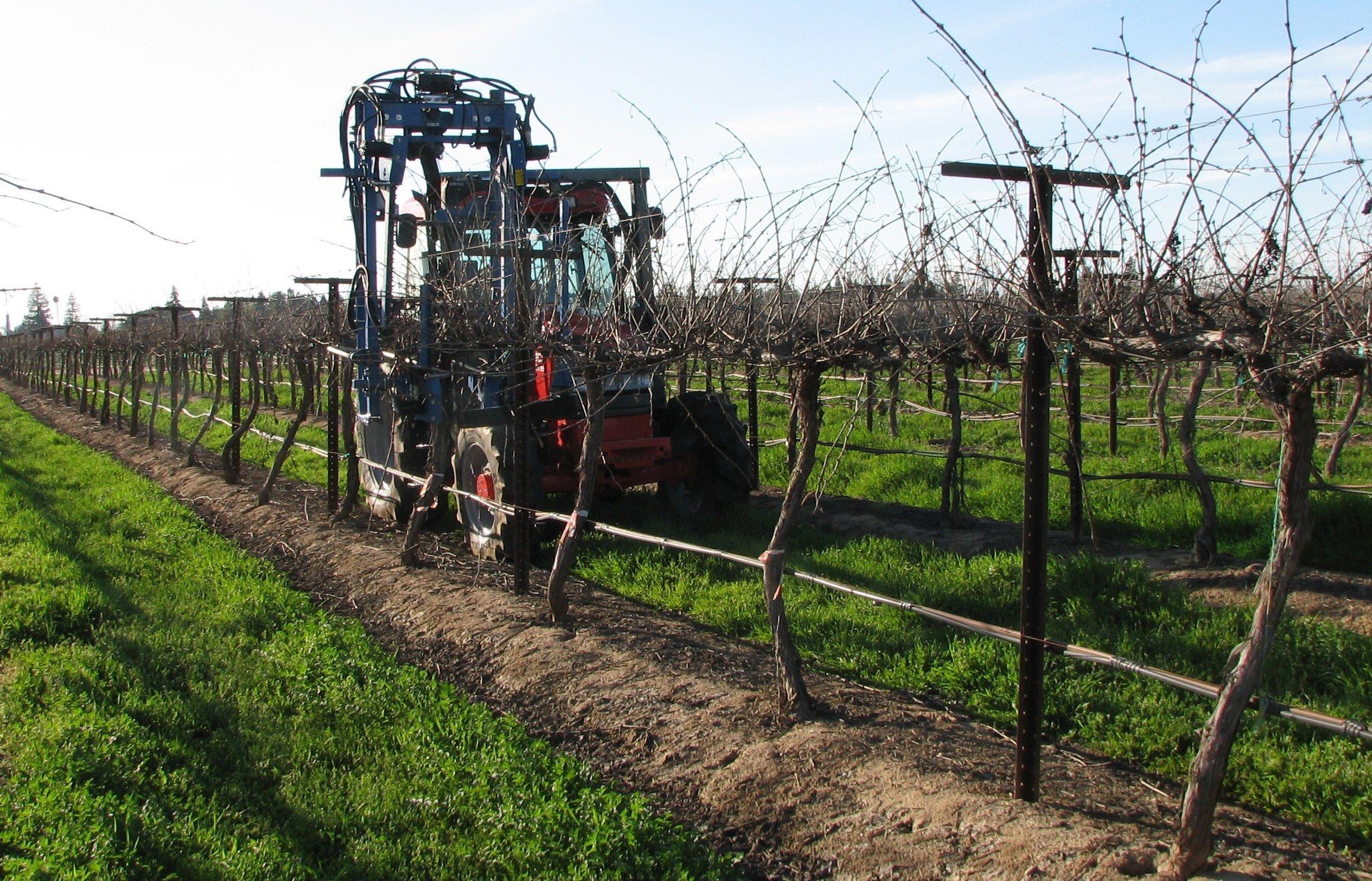 Wine Grape Mechanical Pruning Field