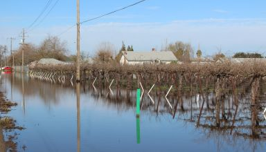 Flooded Vineyard
