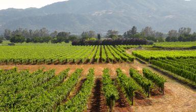 California Grape Acreage Report 2018 Summary