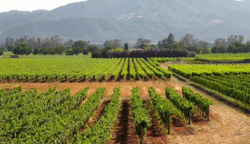 California Grape Acreage Report 2018 Summary