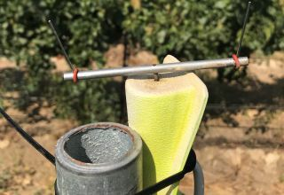 New Powdery Mildew Spore Trapping Technology for Grapes