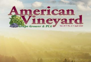 American Vineyard April 2020