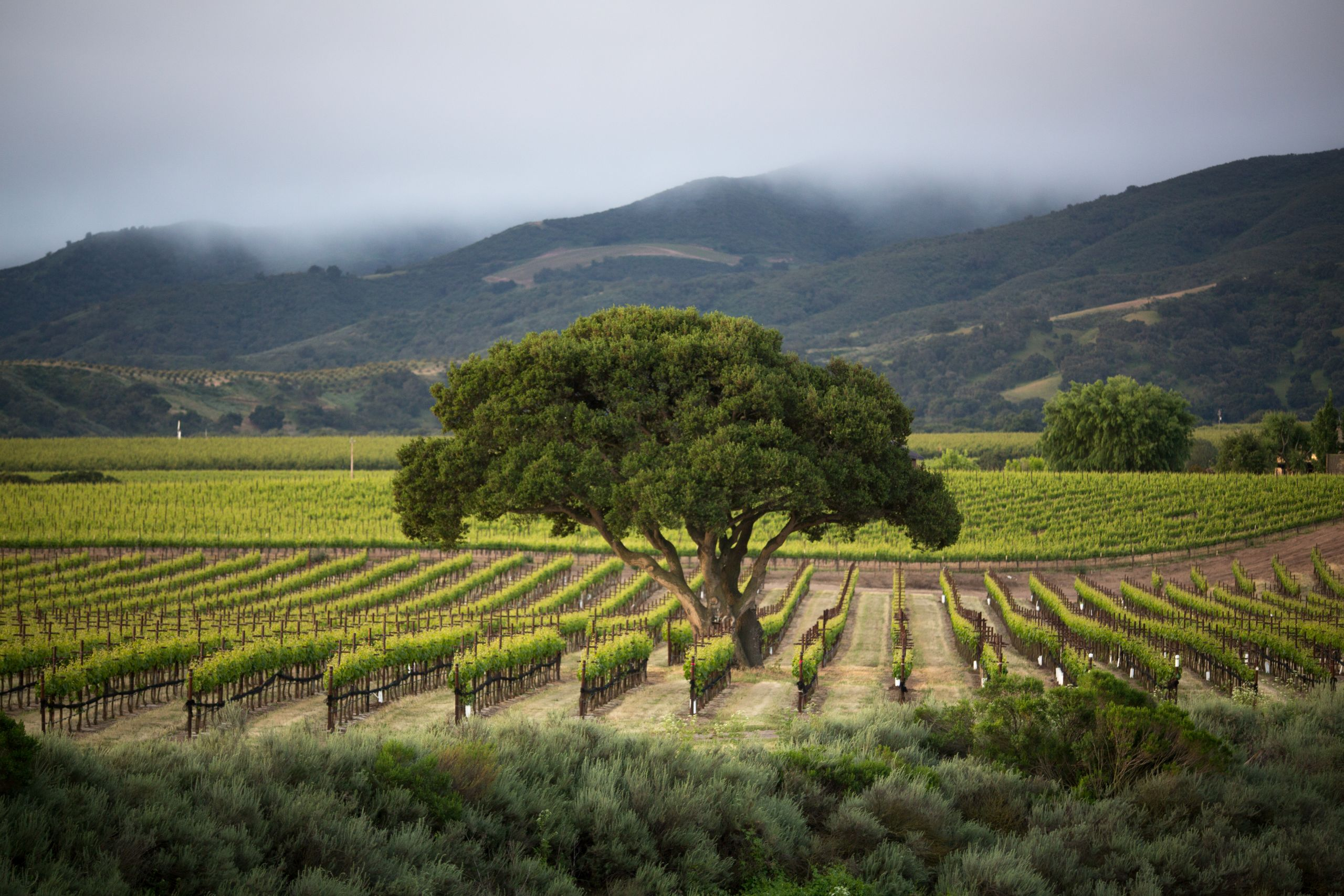 Wine Growers Honored With Sixth Annual
