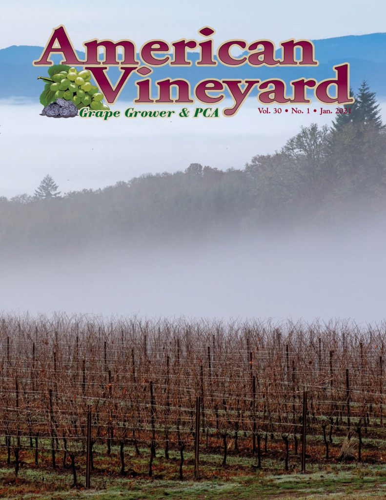 American Vineyard January Issue